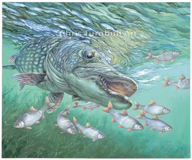 Chris Turnbull Pike art fishing