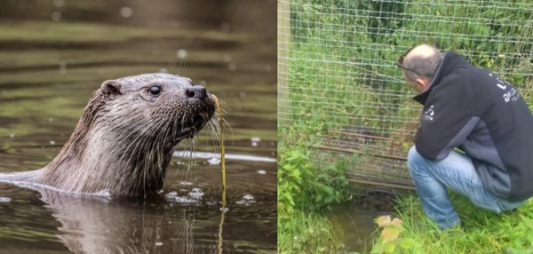 Otter fence maintenance advice