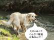 集客に役立つLINEアプリ紹介!【厳選4選】