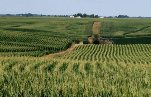 south-africa-farming-620x400.jpg