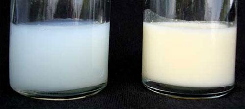 Breast Milk and Formula Milk on Lingerie Briefs