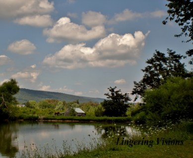 Fluffy clouds over a pond; Dawn M. Miller, 2013