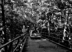 BnW Bridges(w)#(4)