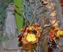 Flower Garden 1(c)# (83)