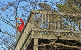 Look Up at Shenandoah River State Park(w)