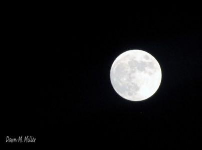 Round Moon(w)