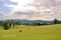 Chartreuse Landscape(w)