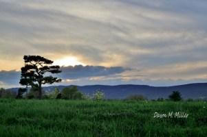 Sunset Silhouette(w)