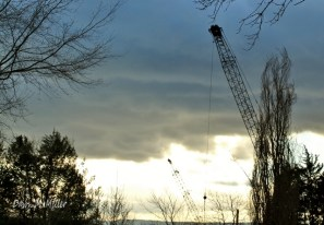 A Crane Silhouetted in the Sky