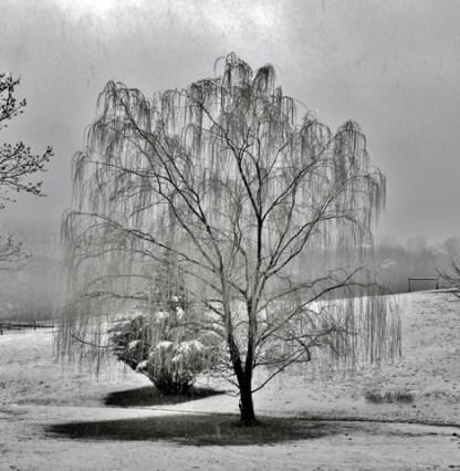 Winter Trees # (3)