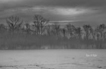Winter Trees # (4)