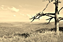 Trees in Sepia# (2)