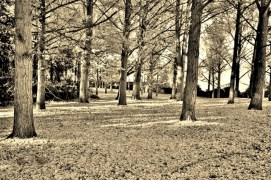Trees in Sepia# (3)
