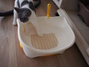 デオトイレ仔猫用