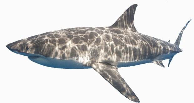 Короткие рассказы на английском языке Shark
