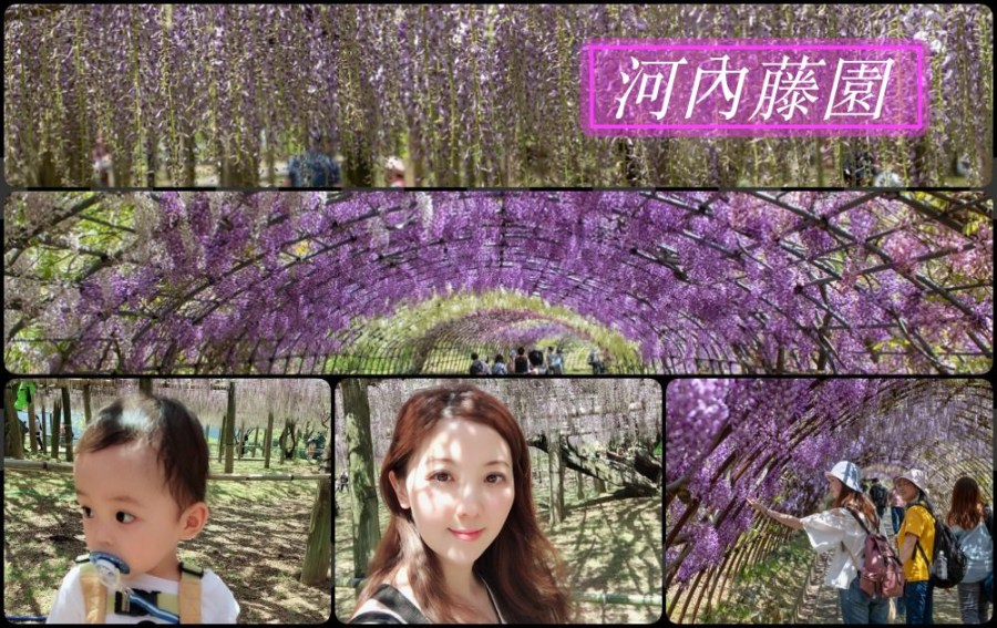 九州紫籐推薦》河內藤園 – 夢幻繽紛的紫籐隧道