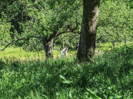 Ein Brautpaar auf den Obstwiesen unterhalb des Braunhofs.