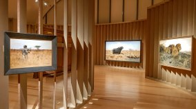 """Blick in den Ausstellungsraum """"König der Tiere"""","""