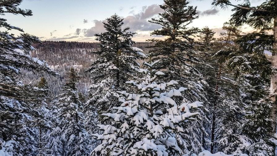 Blick ins Rennbachtal Baumwipfelpfad Schwarzwald im Winter mit Schnee