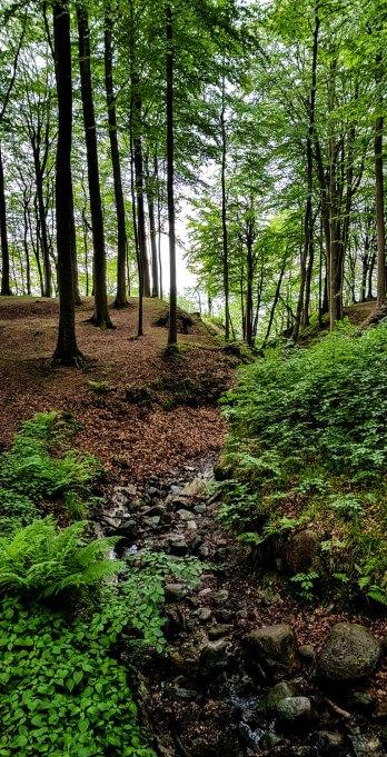 In diesem Küstenwald sucht der Kieler Tatortkommissar Borowski nach der Leiche.