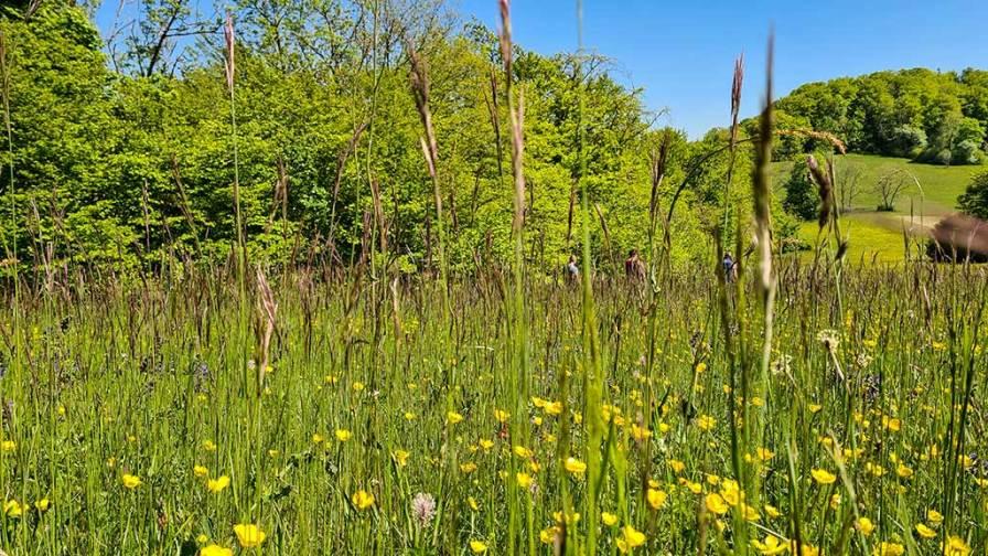 HW 5 Blumenwiese im Mai