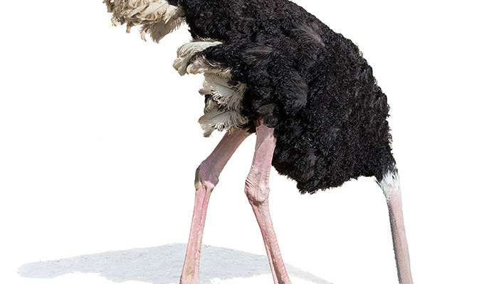 Don't be an Ostrich: Why you can't go head-down on strategic planning