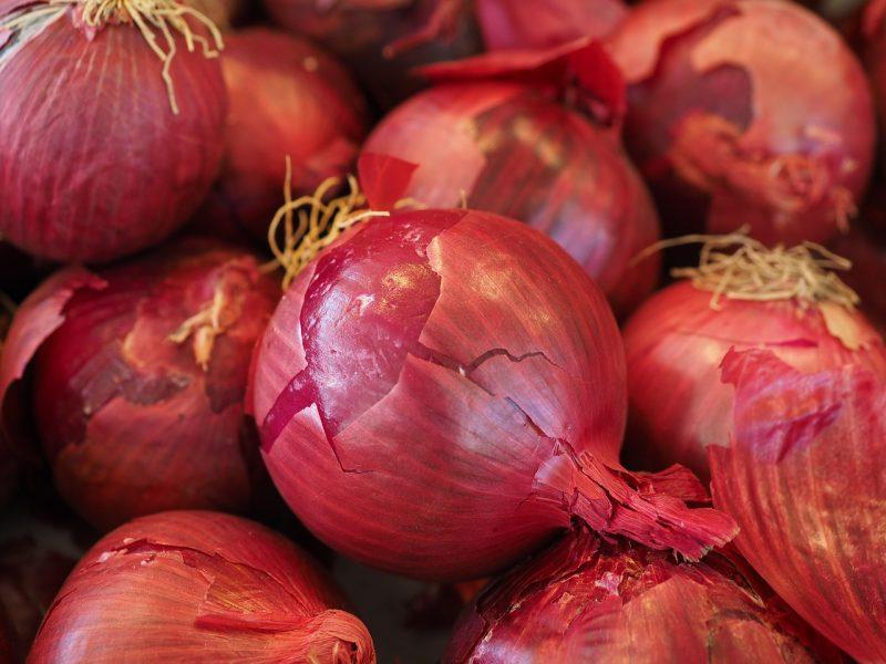 pemilihan bibit bawang merah