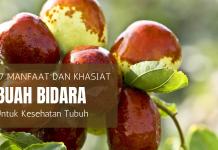 manfaat buah bidara