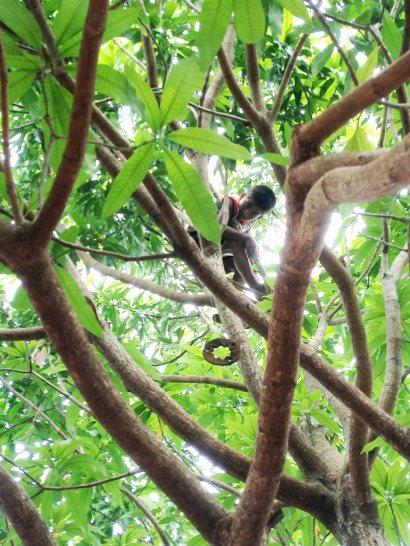 Chepe en el árbol
