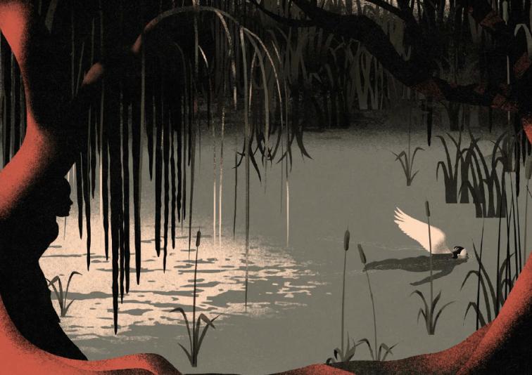 Rey cisne