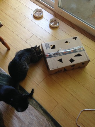 The cats checking out their new enrichment device