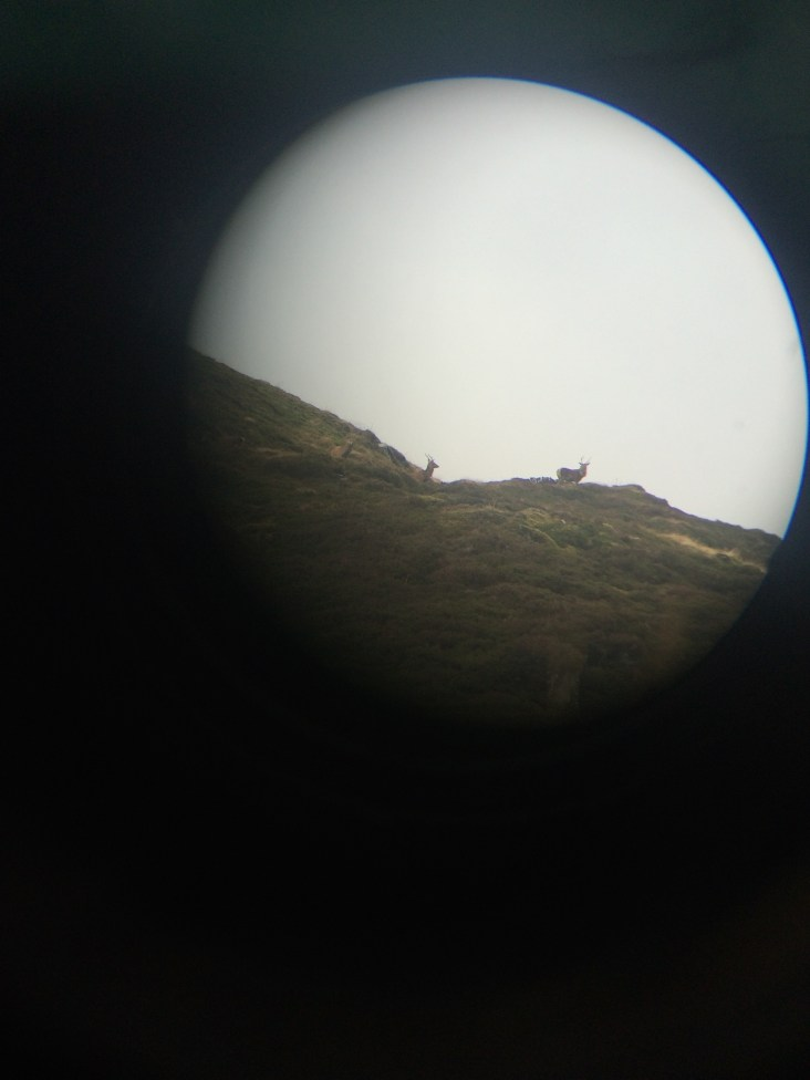 Wild stag/deer on S's dad's birthday expedition!