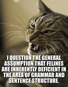 lolcat-i-question-the-general-assumption-that-feli1