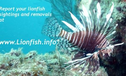 Largest Lionfish Contest for entire range of invasive lionfish