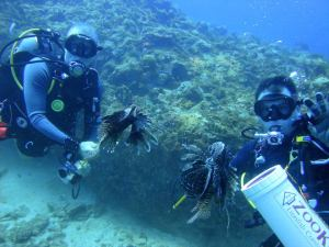 A good buddy is important for safely hunting lionfish
