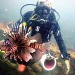 How to start lionfish hunting