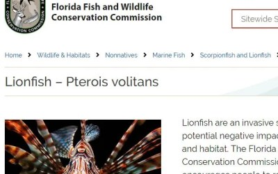 Florida Fish and Wildlife Conservation Commission Lionfish News