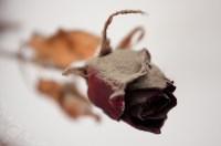 Dried Rose Sculpture