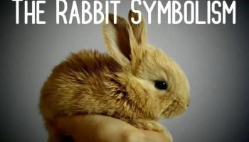 The Rabbit Symbolism -Spirit Animal & Meaning