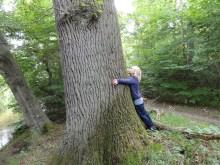 loving trees <3