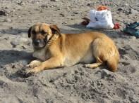 a friend at the beach