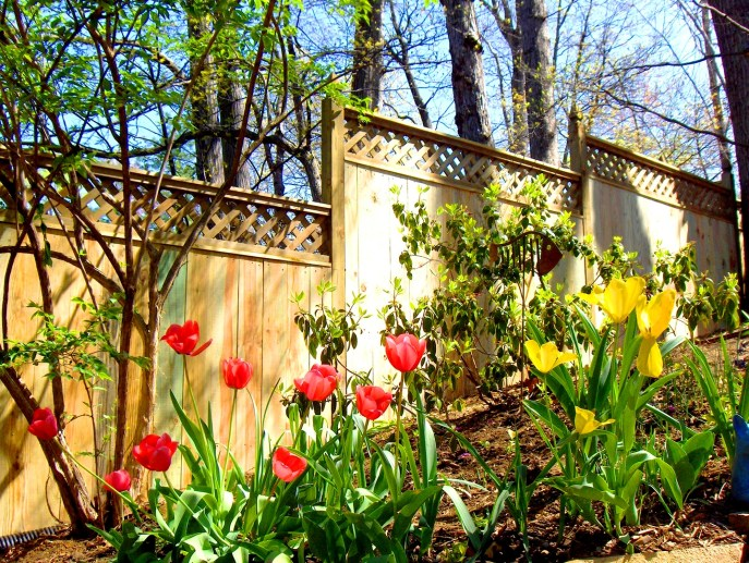 Privacy with Lattice Arlington Arlington County VA by Lions Fence 5