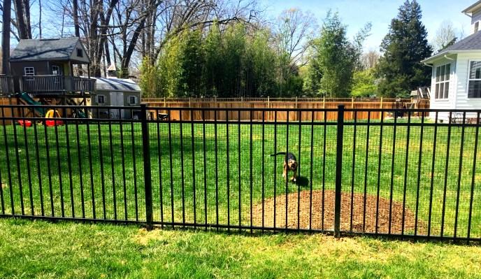 aluminum fence Loudoun county 1