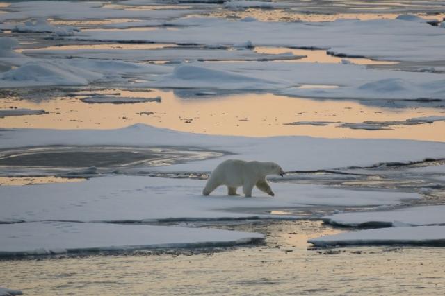 Spitzbergen2019-18