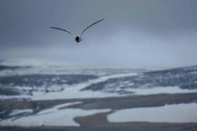 Spitzbergen2019-26