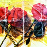 Viata ca un film...fotografic (XII). Trandafirii rosii