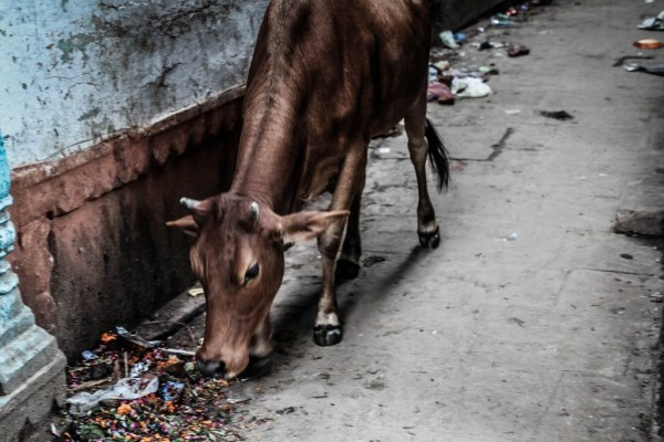 India-Varanasi-rasarit-63_1024x683-600x400