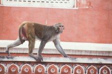 India-Varanasi-rasarit-388_1200x800