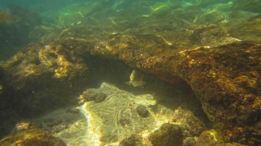 El-nido-island-hopping-tour-subacvatic-15_1024x575