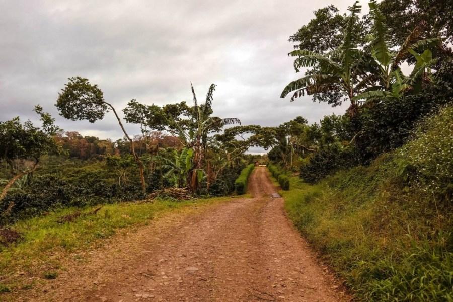 plantatie-de-cafea-BeanZ-Nicaragua-1-of-376-158_1575x1050_1280x853